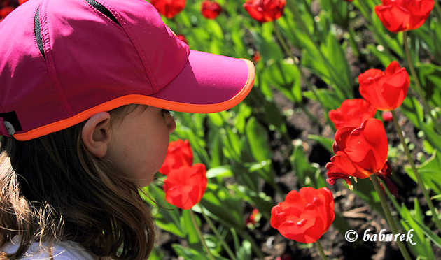 The Canadian Tulip Festival, annually in May