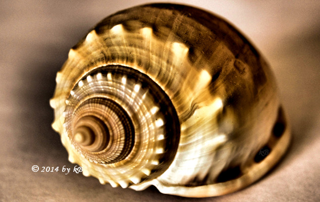 HDR photo of a spiral seashell