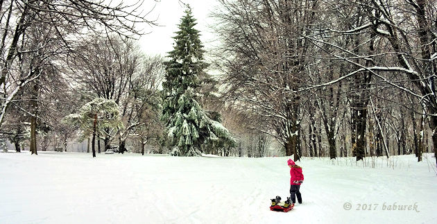 Snow day on Mount Royal